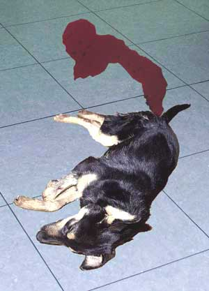 What Can I Do For Diarrhea In My Dog